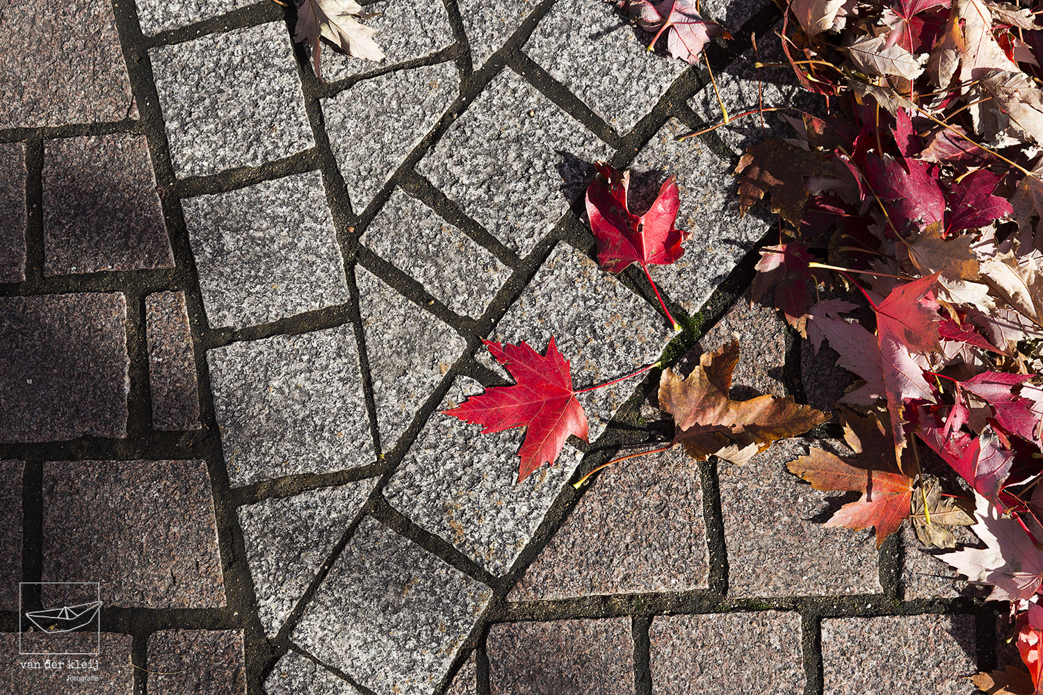 Detail of the maple leaf mosaic of the Water's Edge Promenade