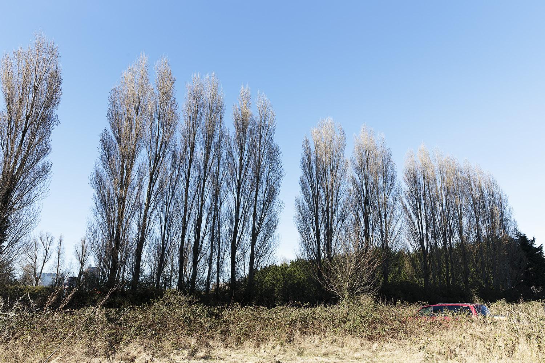 Zonweg, begraafplaats St. Barbara, Binckhorst, Den Haag – 25 maart 2017